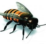 αλλεργία-σε-σφήκες-image