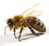 H. Bee