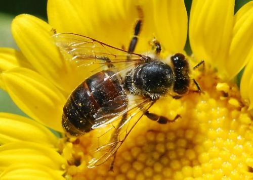 ΚΑΛΟΚΑΙΡΙΝΑ ΤΣΙΜΠΗΜΑΤΑ (μέρος 1): Ενδιαφέρουσες γνώσεις και Χρήσιμες συμβουλές για τις μέλισσες και τις σφήκες