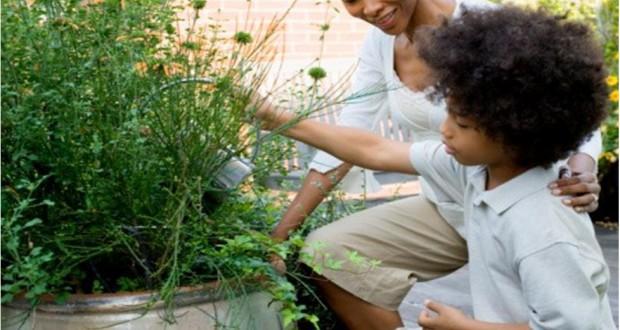 Πώς να μειώσω τα αλλεργιογόνα στον κήπο μου το φθινόπωρο;