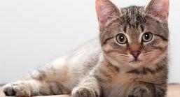 Γάτα, σκύλος και ακάρεα: γιατί προκαλούν συχνά αλλεργία?