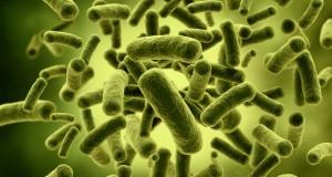Χρήσιμα μικρόβια για την πρόληψη της αλλεργίας