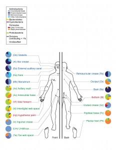 Απεικόνιση του ανθρώπινου σώματος και των βακτήριων που κυριαρχούν