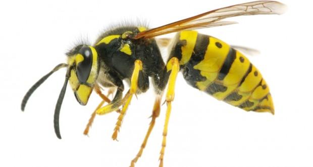 Νέα διαγνωστικά εργαλεία για την αλλεργία στις σφήκες